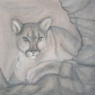 Puma von Richarda Rudin