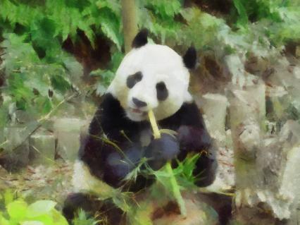 Panda von WIESER Kurt
