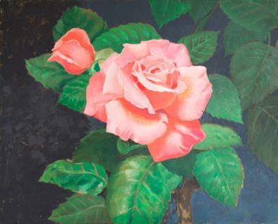 Rose von KOHLMAYER Jakob